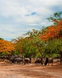 Scenery with flame trees Stock Photos