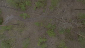 The scenery of forest with road. Shooting from the top. Camera moves forward. There are a green trees and road at the bottom. The scenery of wild forest. The stock footage