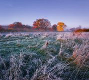 Scenery frosty autumn. Morning landscape of meadow with hoarfrost and colored trees on horizon. Fall frosty morning. Royalty Free Stock Photography