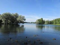Scenery Gatchina Park. Lake with ducks at the Gatchina Palace Park Stock Images