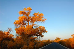 Scenery of Golden Autumn Stock Images