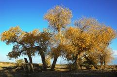 Scenery of Golden Autumn Stock Photography