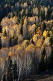 Scenery of Golden Autumn Stock Photos