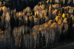 Scenery of Golden Autumn Royalty Free Stock Images