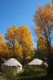 Scenery of golden fall Royalty Free Stock Photo