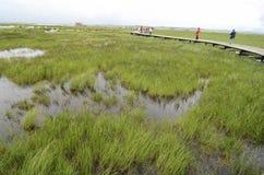 Scenery of grassland at Tibetan plateau Royalty Free Stock Image