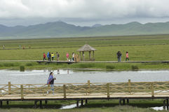 Scenery of grassland at Tibetan plateau Royalty Free Stock Images