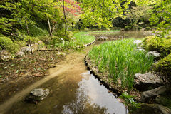 The scenery of green grass gardening in the pond. Stock Photography
