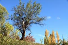 Scenery in the Gudar mountains Teruel Spain. Poplars in autumn Scenery in the Gudar mountains Teruel Spain Stock Image
