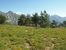 Scenery of high mountain green meadow on corsician alpes with bi Royalty Free Stock Photos