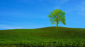 Scenery at hillside in Europe. Stock Photo