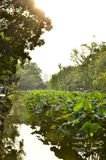 The scenery of Humble Administrator's Garden at Suzhou, China. Royalty Free Stock Image