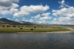 Scenery In Tibet Stock Photo