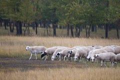 Scenery of Inner Mongolia Prairie Royalty Free Stock Photo