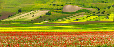 Scenery of Italy - Castelluccio di Norcia, blooming meadows. Umb Royalty Free Stock Photography