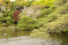 The scenery of Japanese garden with the pone. Stock Photo