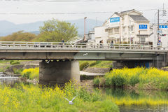 Scenery of Kamogawa with yellow flowers and bridge Stock Image
