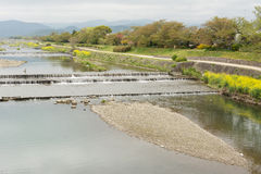 Scenery of Kamogawa. With yellow flowers in Kyoto Royalty Free Stock Photo