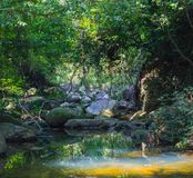Scenery in Khao Sok National Park in Thailand. Khao Sok National Park the rain jungle forest in Surat Thani province.  Royalty Free Stock Photo