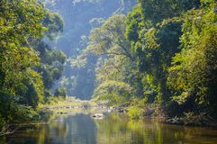 Scenery in Khao Sok National Park in Thailand. Khao Sok National Park the rain jungle forest in Surat Thani province.  Royalty Free Stock Image