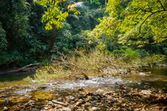 Scenery in Khao Sok National Park in Thailand. Khao Sok National Park the rain jungle forest in Surat Thani province.  Stock Photography