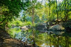 Scenery in Khao Sok National Park in Thailand. Khao Sok National Park the rain jungle forest in Surat Thani province.  Royalty Free Stock Photography