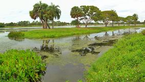 Scenery at Lake Taylor Florida. This is a small inlet at Lake Taylor, Florida in HDR royalty free stock images