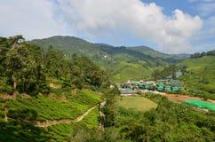 Scenery landscape of tea plantation an housing Stock Photography