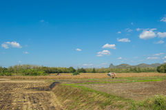 Scenery Loei province Royalty Free Stock Photography
