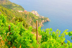 Scenery of Manarola village on a vine hill Stock Photos