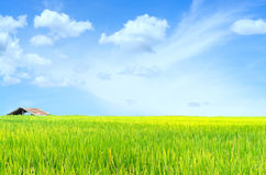 Scenery meadow viewpoint and green paddy rice field for backgrou Stock Images