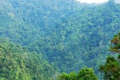 Scenery of the mountains in tropical rainforest Abundant nature Royalty Free Stock Images