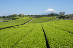 The scenery of Mt.Fuji and green tea fields. The beautiful scenery of Fuji mountain and green tea fields at Fuji city in Shizuoka,Japan Stock Image