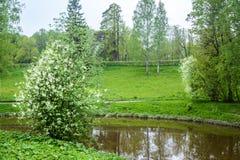 Scenery is nice. The landscape is idyllic. Pavlovsk Park, city of Pavlovsk. The kings Park. Landscape is idyllic. The forest and the lake in loue, Park. Summer Stock Images