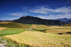 Scenery Of Grain Field And Mountain Royalty Free Stock Photos