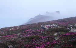 The scenery with the old observatory that is on the mountain covered with the light fog. Lawn with the rocks and pink rhododendron stock image