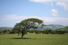 Scenery outside Tywyn Stock Photo