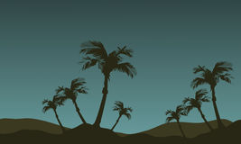 Scenery of palm tree silhouette Stock Images