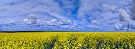 Scenery panorama. Blue sky, clouds and field of blooming rape Royalty Free Stock Photography