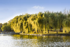 Scenery of a park. In autumn Royalty Free Stock Photography