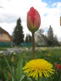Scenery photo with macro flowers on a spring day in the urban landscape Royalty Free Stock Photo