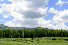 Scenery of Qinghai province in China Royalty Free Stock Images