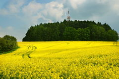 Scenery with rapeseed flowers Royalty Free Stock Photos