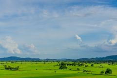The scenery of rice field royalty free stock photo