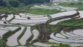Scenery of rice terraces. June, It is the scenery of rice terraces prepared for rice planting stock video