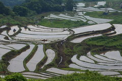 Scenery of rice terraces Royalty Free Stock Image