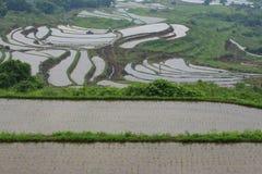 Scenery of rice terraces Stock Photo