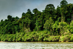 Scenery from the river Sungai tembeling inside the forest Royalty Free Stock Photography