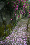 The scenery in rose garden Stock Photos
