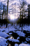 Scenery of snow forest Stock Photo
